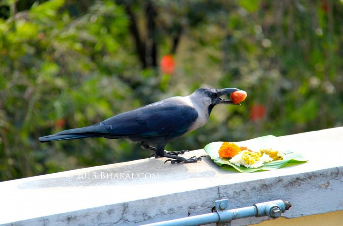 Offerings to Crow